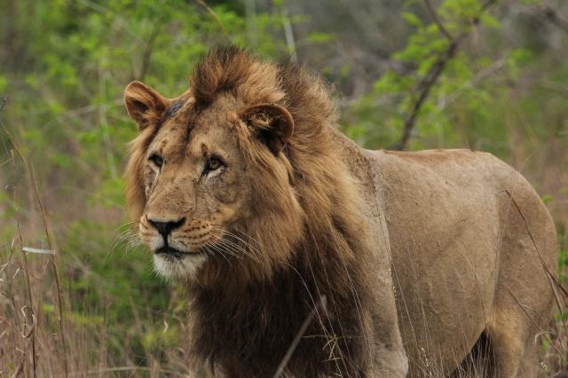 LionBoy.jpg
