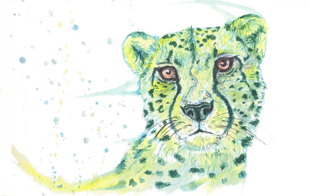 Cheetah-WebSize