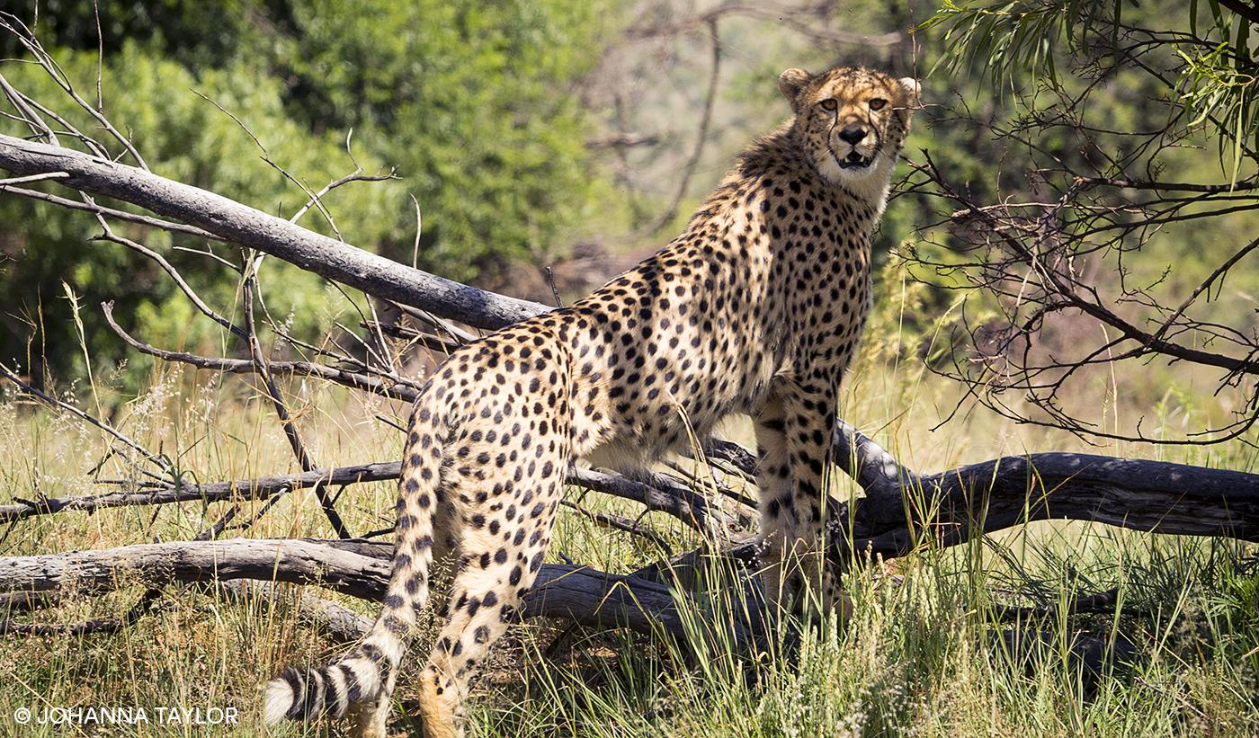 Cheetah-Sisters-Blog-Photo-e-IMG_1277.jpg