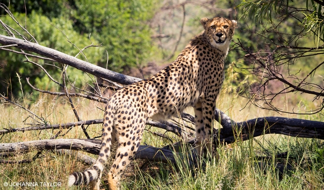 Cheetah-Sisters-Blog-Photo-e-IMG_1277.jpg