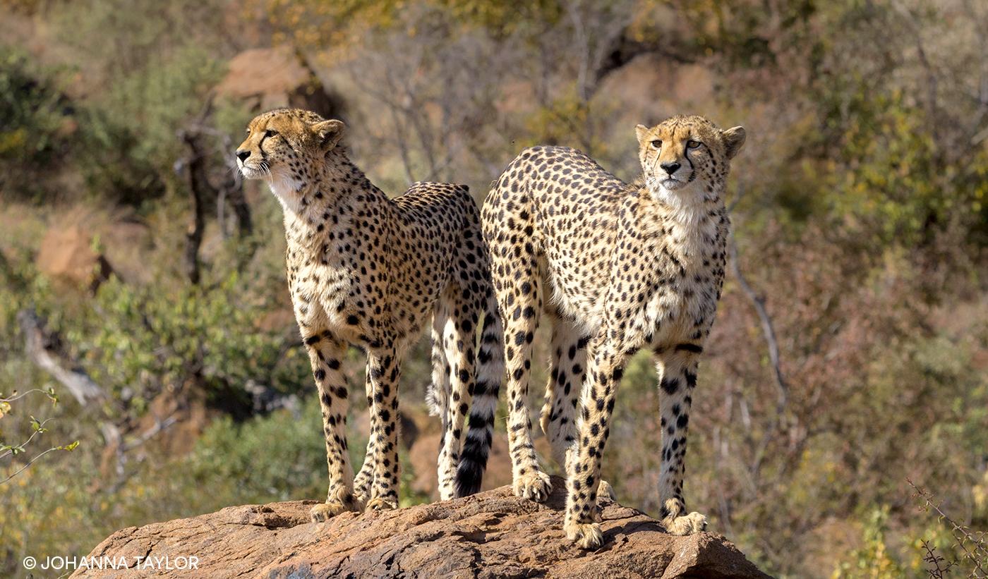 Cheetah-Sisters-Blog-Photo-IMG_3535.jpg
