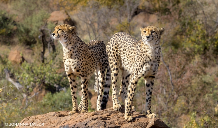 Cheetah-Sisters-Blog-Photo-IMG_3535.jpg