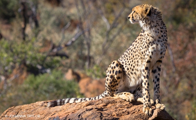 Cheetah-Sisters-Blog-Photo-IMG_3578.jpg