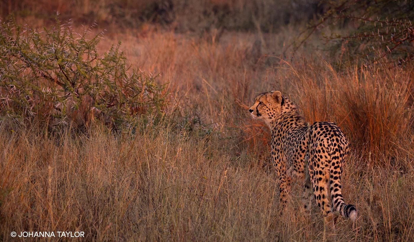 Cheetah-Sisters-Blog-Photo-IMG_3777.jpg