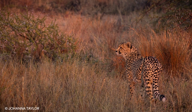Cheetah-Sisters-Blog-Photo-IMG_3777.jpg